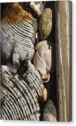 Shell Work  Canvas Print by Eugene Bergeron