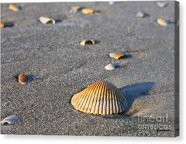 Shells 01 Canvas Print by Melissa Sherbon