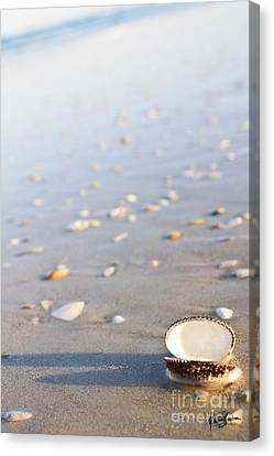 Canvas Print featuring the photograph Shells 02 by Melissa Sherbon