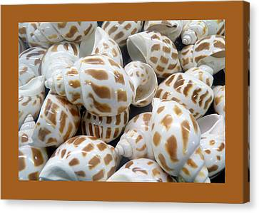 Shells - 7 Canvas Print