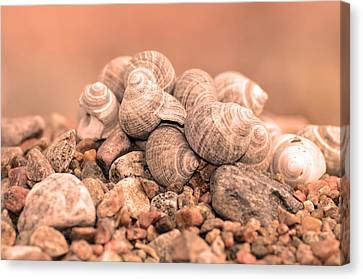 Bokhe Canvas Print - Shells In A Pile by Tommytechno Sweden
