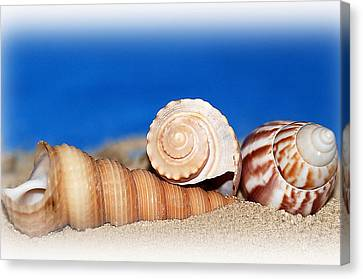 Shells In Sand Canvas Print by Francie Davis