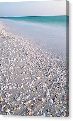 Shells In The Sand Canvas Print by Adam Pender