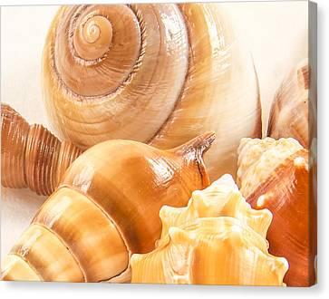 Shells Canvas Print by Jean Noren