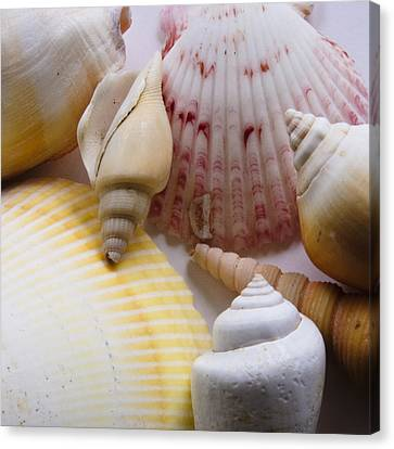 Canvas Print featuring the photograph Shells by Kevin Bergen