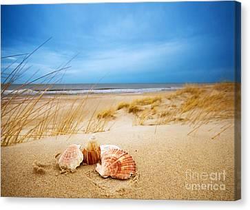 Shells On Sand Canvas Print by Michal Bednarek