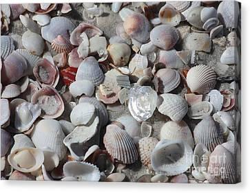 Beach Theme Decorating Canvas Print - Shells On Treasure Island by Carol Groenen