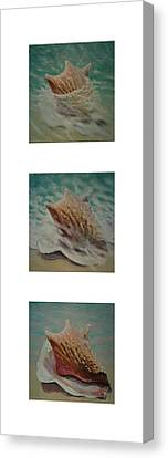 Shells Triptych 2 Canvas Print by Don Young