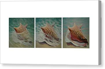 Shells Triptych Canvas Print by Don Young