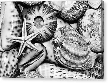 Shellscape In Monochrome Canvas Print by Kaye Menner