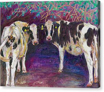 Sheltering Cows Canvas Print by Helen White