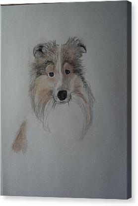 Shetland Sheepdog Canvas Print - Sheltie by Image Source