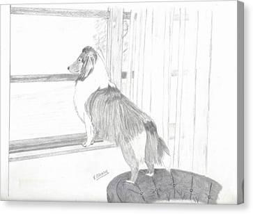 Shetland Sheepdog Canvas Print - Sheltie Waiting by Virginia Cleary