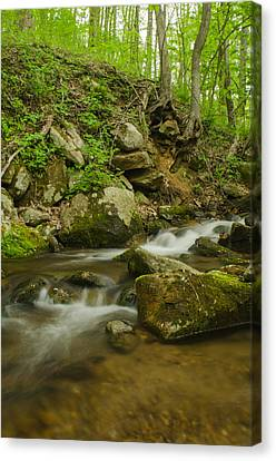 Brian Rock Canvas Print - Shenandoah Stream No. 2 by Brian Rock