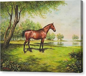Shenandoah's Hero Canvas Print by Lynn Bywaters