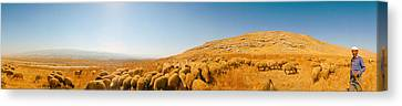 Shepherd Standing With Flock Of Sheep Canvas Print by Panoramic Images