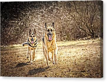 Shepherds On The Run Canvas Print by Eleanor Abramson