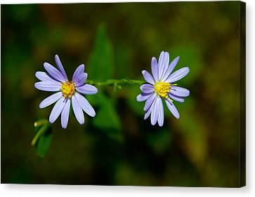 Sherando Lake Wildflowers Canvas Print