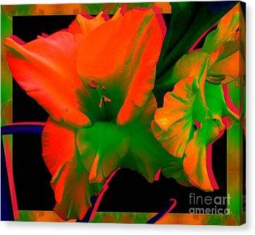 Sherbert Gladiolus Canvas Print by Margaret Newcomb