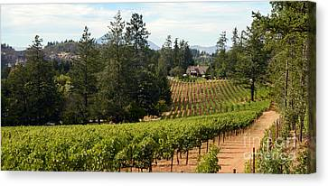 White Wine Canvas Print - Sherwin Family Vineyards by Jon Neidert