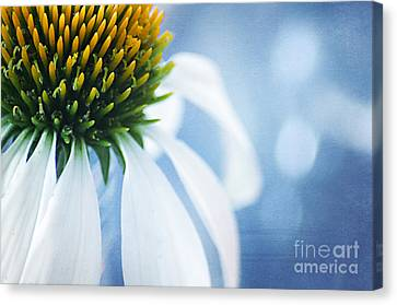 Close Focus Floral Canvas Print - She's A Little Blue by Darren Fisher