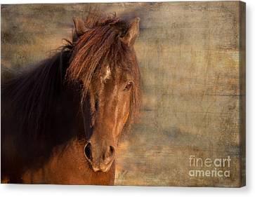 Shetland Pony At Sunset Canvas Print