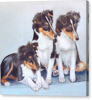 Shetland Sheepdog Puppies Canvas Print