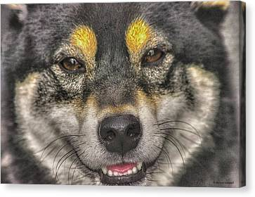 Canvas Print featuring the photograph Shiba Inu by Dennis Baswell