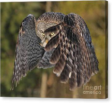 Shields Up Canvas Print by Heather King