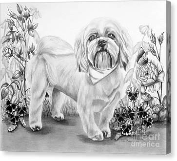 Shih Tzu In Black And White Canvas Print by Lena Auxier