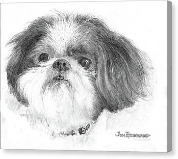 Shih-tzu Canvas Print by Jim Hubbard