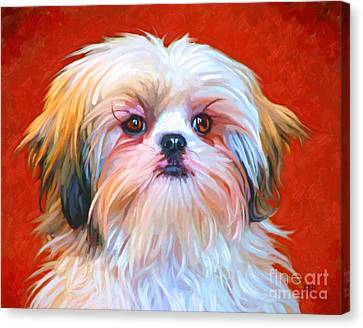 Shih Tzu Painting Canvas Print by Iain McDonald