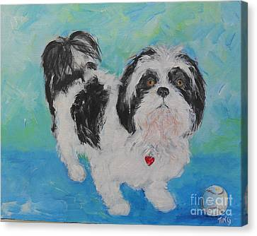 Shih Tzu Yoda Canvas Print by Doris Blessington
