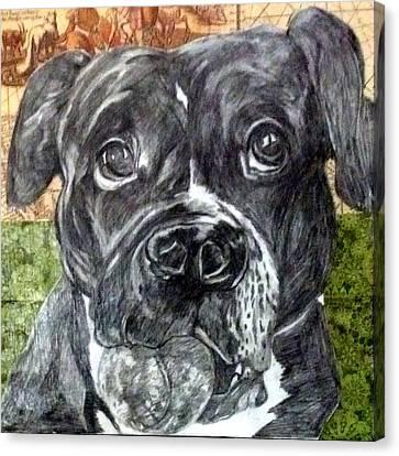 Shikko Canvas Print by Ashley Reign