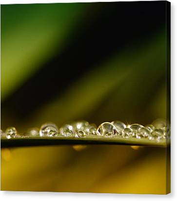 Shine Like Diamonds Canvas Print by Kent Mathiesen