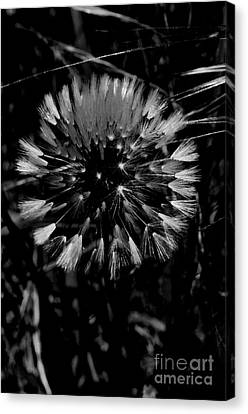 Canvas Print featuring the photograph Shining by Simona Ghidini