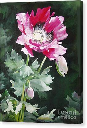 Shining Star Poppy Canvas Print by Suzanne Schaefer