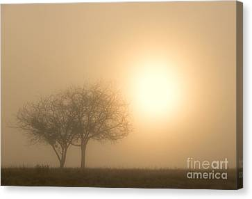 Shining Through Canvas Print by Mike  Dawson