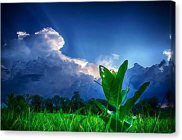 Shining Through Canvas Print by Ryan Crane