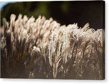 Canvas Print featuring the photograph Shining Weeds by Mike Lee