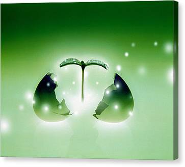 Shiny Green Egg Bursting In Two Canvas Print by Panoramic Images