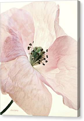 Shirley Watercolor Canvas Print by Chris Berry