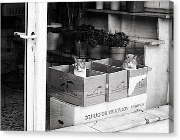 Canvas Print featuring the photograph Shop Window Cats by Laura Melis