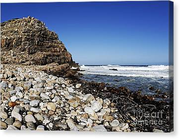 Shore At Cape Of Good Hope Canvas Print by Sami Sarkis