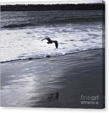Shore Bird -02 Canvas Print by Gregory Dyer