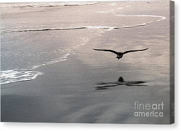 Shore Bird Canvas Print by Gregory Dyer
