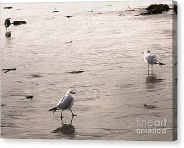 Shore Birds - 01 Canvas Print by Gregory Dyer