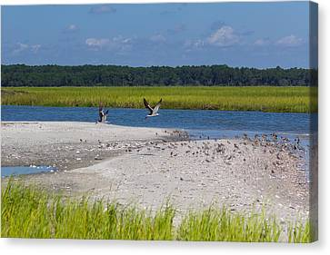 Shorebirds And Marsh Grass Canvas Print by Patricia Schaefer