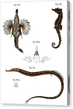 Short Dragonfish Canvas Print by German School