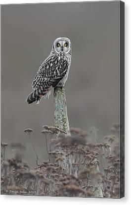Canvas Print featuring the photograph Short Ear Owl by Daniel Behm
